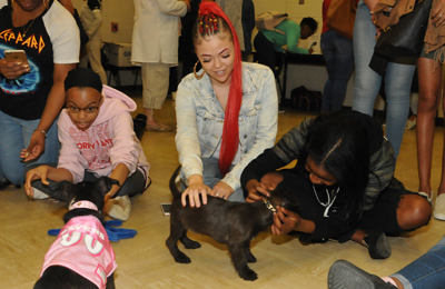 More than 400 students participated in Dog Therapy Day.