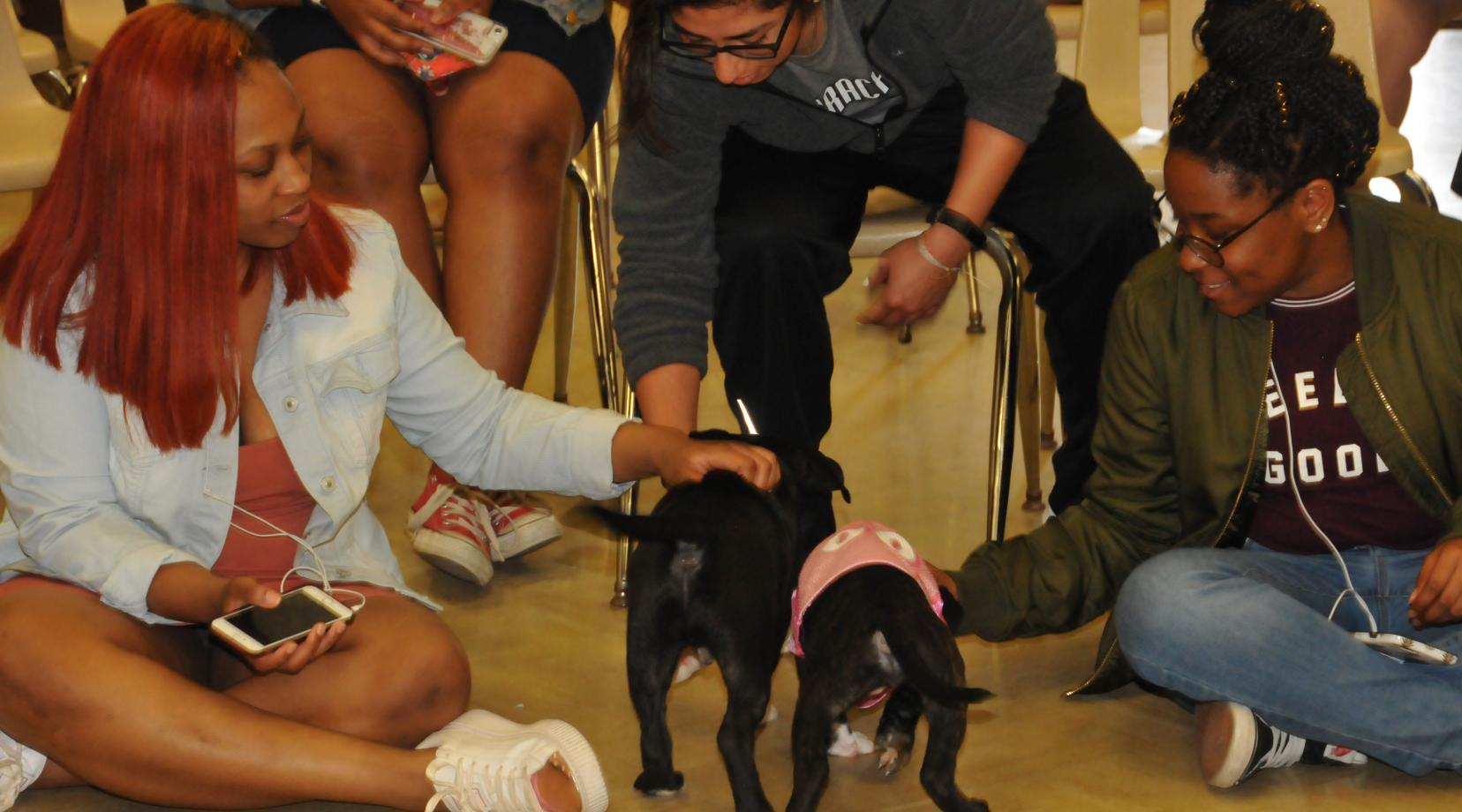 Two DSU students play with two puppies as a relaxing way to reduce stress.