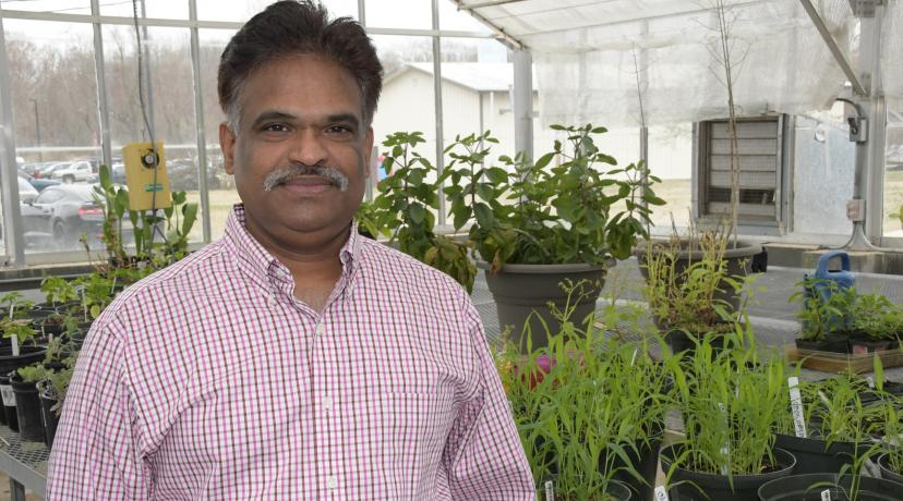 <p>Dr. Sathya Elavarthi, associate professor of applied agriculture science, is spearheading the University&#039;s newest investigatory pursuit -- hemp cultivation research</p>